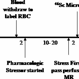 (PDF) Quantification of Myocardial Blood Volume During