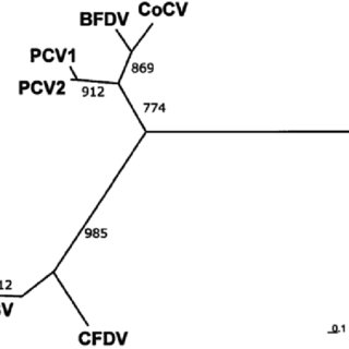 Consensus primer PCR. The result of a consensus primer PCR