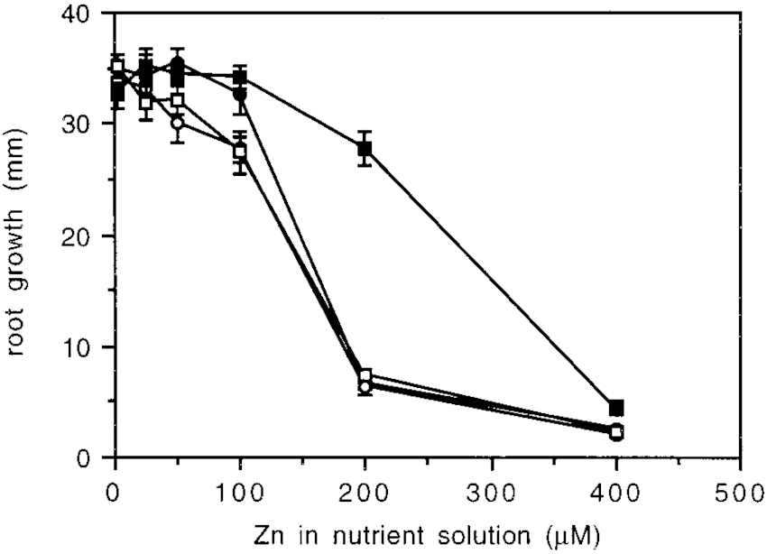 Arabidopsis root growth during 72 h of exposure to Zn in