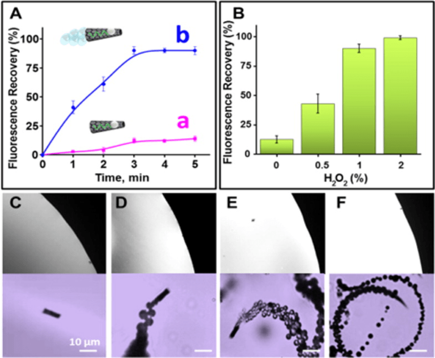 Ricin-triggered fluorescence recovery: influence of the ...