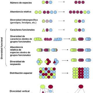 PDF Biodiversidad y bienestar humano el papel de la