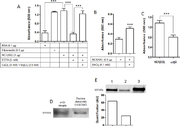 αvβ3 integrin specifically binds NC1(XIX). ( A ) Effect of