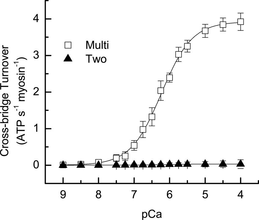 Steady-State Cross-Bridge Turnover Average ATPase (one ATP