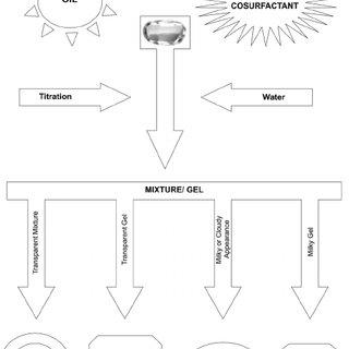 Schematic representation of single pass intestinal