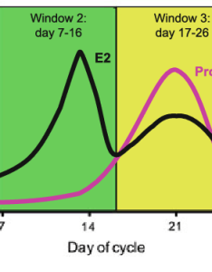 Stylised graph showing the variation of estradiol  and progesterone prog serum levels during menstrual cycle day   beginning also rh researchgate