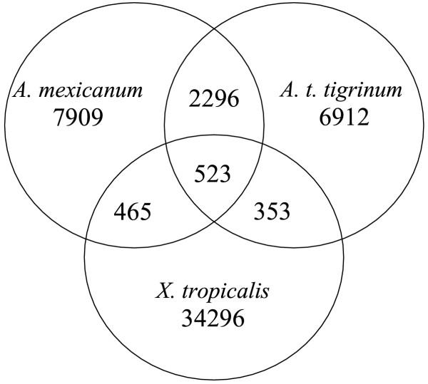 Venn diagram of BLAST comparisons among amphibian EST