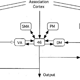 (PDF) Pre-frontal executive committee for perception