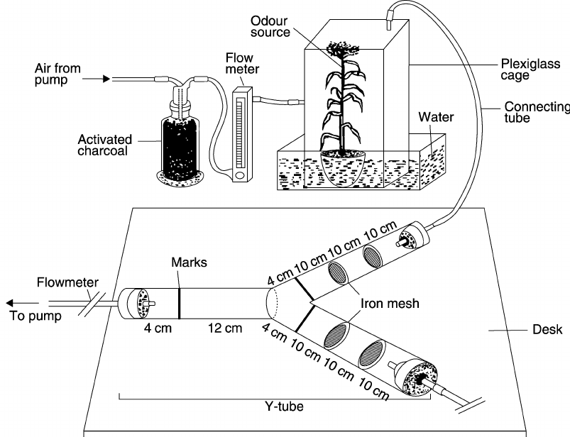 Schematic diagram of the Y-tube set-up (Figure not drawn