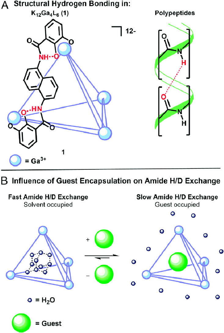 hight resolution of  a structurally important hydrogen bonding in tetrahedron 1 lines represent ligands and spheres