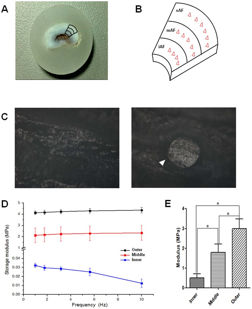 medium resolution of mechanical tests of af tissues a b the picture of a paraffin embedded af sample and a schematic showing how the testing regions and points were selected