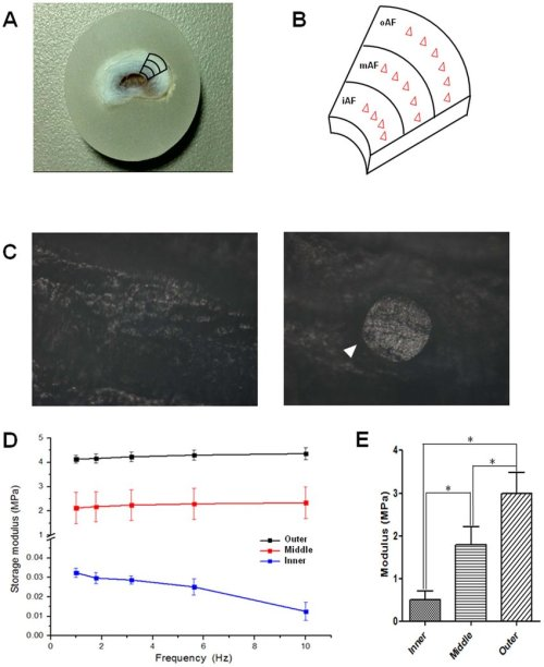 small resolution of mechanical tests of af tissues a b the picture of a paraffin embedded af sample and a schematic showing how the testing regions and points were selected