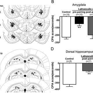 Conditioned morphine withdrawal induced Arc protein