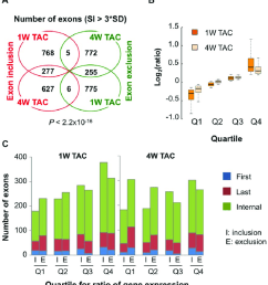 global analysis of mrna isoform regulation in cardiac hypertrophy a venn diagram of [ 850 x 943 Pixel ]