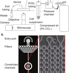schematic illustration of the experimental setup a cell deformer device in the experimental setup showing the peripheral connections  [ 800 x 1164 Pixel ]