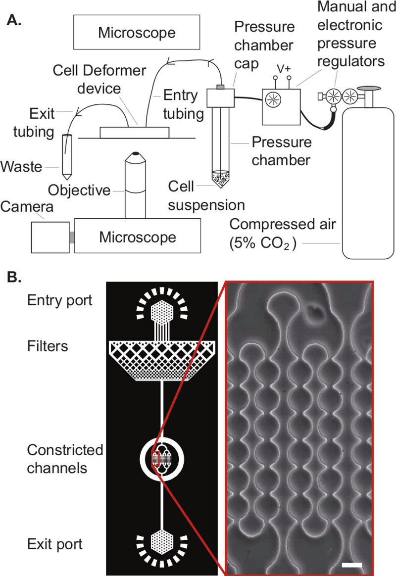 hight resolution of schematic illustration of the experimental setup a cell deformer device in the experimental setup showing the peripheral connections