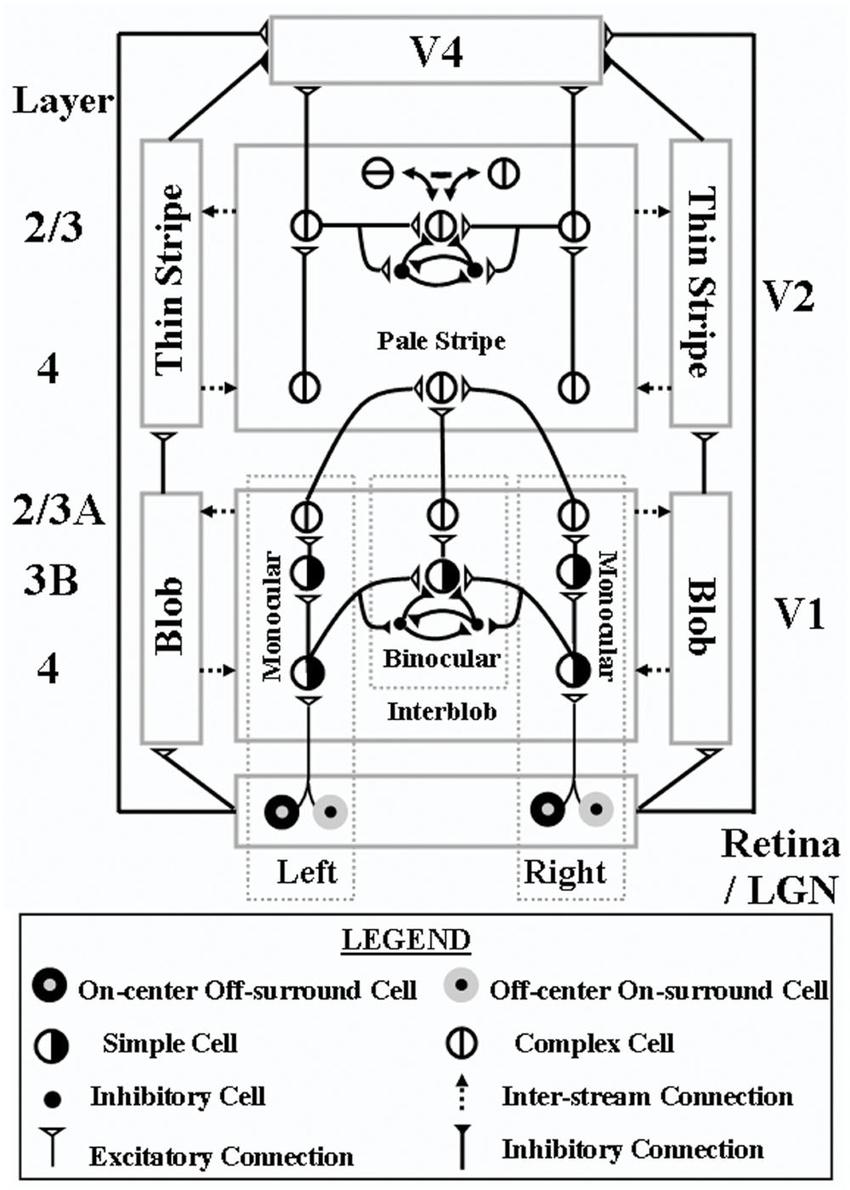 3D LAMINART model circuit diagram. This laminar visual