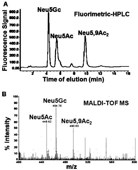 Sialic acids siglec interaction: A unique strategy to