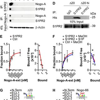 Nogo-A binds to S1PR2. (A) Schematic structure of Nogo-A