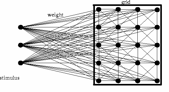 This is a schematic diagram of Kohonen's self-organizing