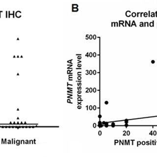 (PDF) Phenylethanolamine N-methyltransferase
