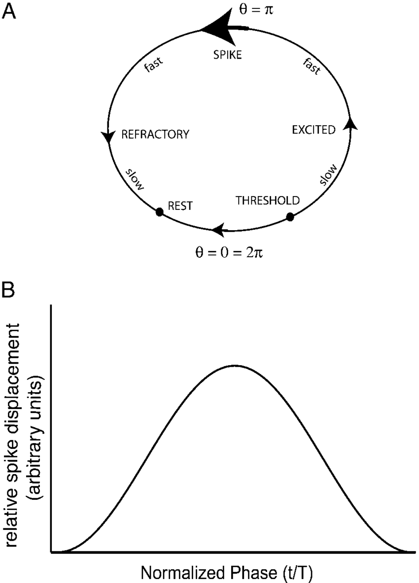 hight resolution of a diagram of the neuron showing the rest state the threshold