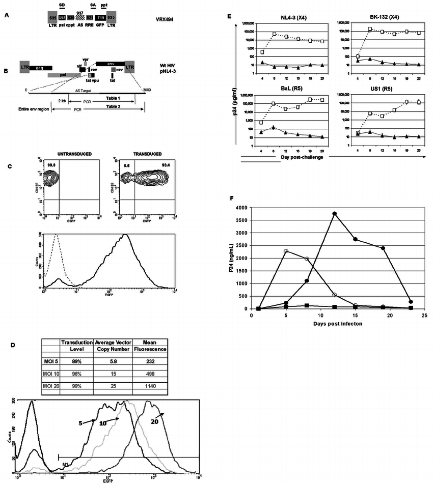 medium resolution of schematic representation of hiv 1 based vector expressing antisense to the hiv 1