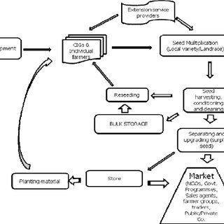 (PDF) COMMUNITY BASED FORAGE SEED SYSTEM APPROACHES IN