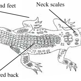 Crocodylus acutus Extent of Occurrence in Colombia