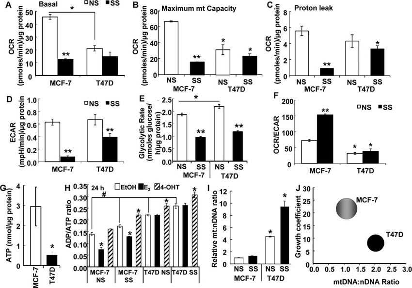 MCF-7 breast cancer cells are more energetic than T47D