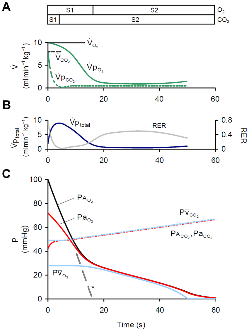 hight resolution of pulmonary gas exchange during apnea a rate of pulmonary o2 co2 download scientific diagram