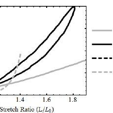 Creep strain curves for: (a) silicone fluid phantoms; and