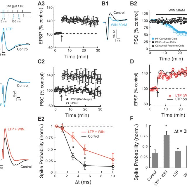 Glycinergic Disynaptic Inhibition in the DCN A. Schematic
