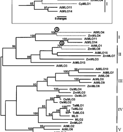 maximum parsimony phylogenetic analysis of amino acid sequence data for monocot and dicot mlo family members [ 850 x 1049 Pixel ]