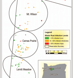 young stands with western white pine surveyed for white pine blister rust in 2015 across three [ 850 x 1114 Pixel ]