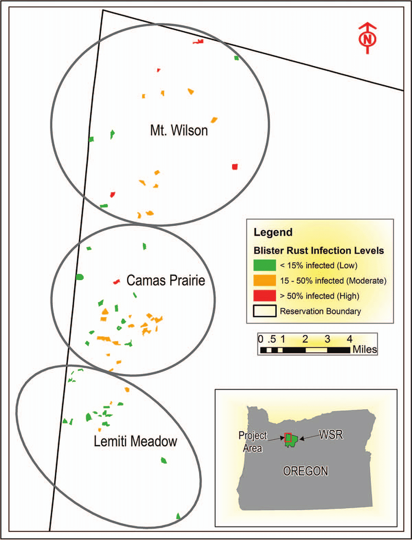 hight resolution of young stands with western white pine surveyed for white pine blister rust in 2015 across three