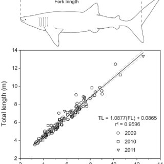 | Growth trajectories for whale sharks kept in captivity