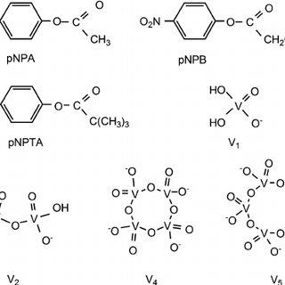 Serylglycine hydrolysis