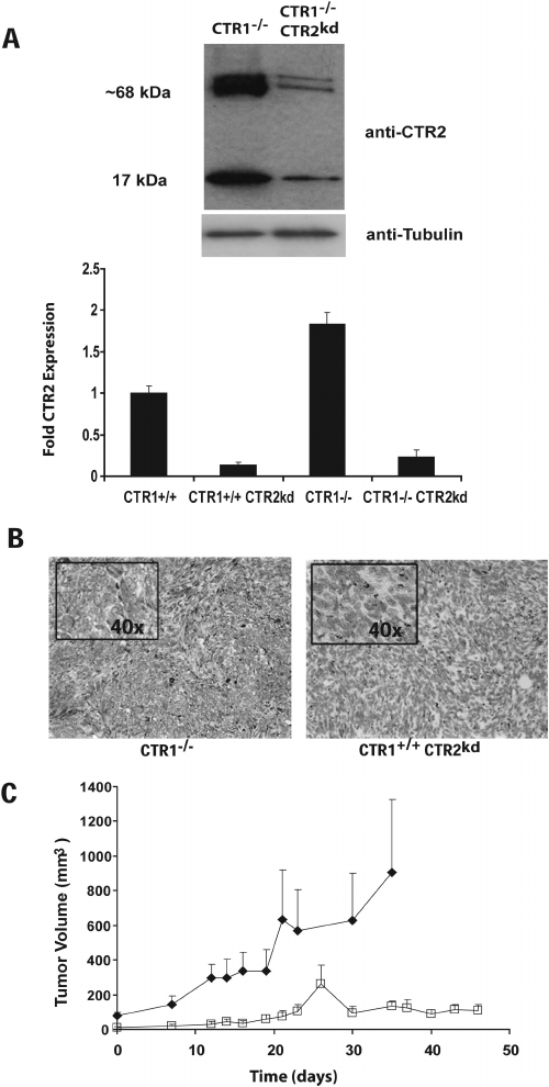 Expression of CTR2 and growth rate of CTR1( Ϫ / Ϫ ) and