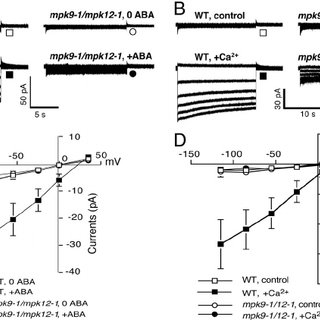 (PDF) MAP kinases MPK9 and MPK12 are preferentially