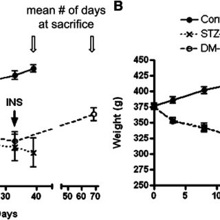Quantification of ATP production in control and diabetic