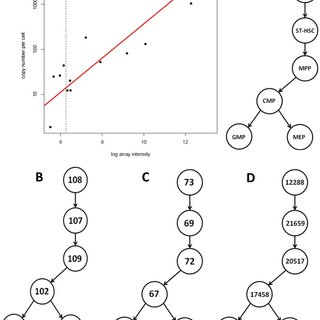 Gating strategy used to isolate HSPC populations in A