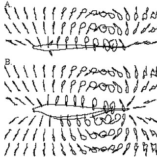 Same as Fig. 4 but in the dorsoventral plane. The
