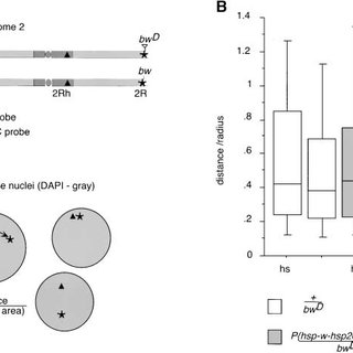 (PDF) Differential Gene Silencing by trans-heterochromatin