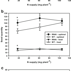 Grain Kernel Diagram 5 Wire Of Wheat Electricity Site Yield And Seed Number Mass Tanam Rnai Wt