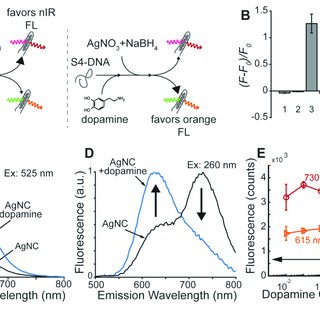 DNA S5 silver nanoclusters acts as ratiometric,