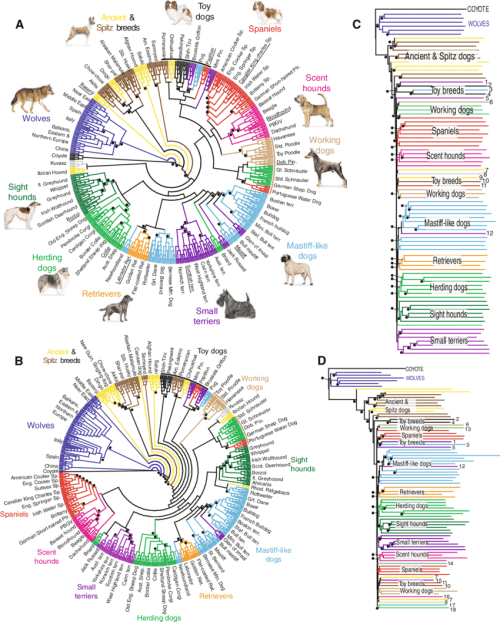 small resolution of genetic similarity tree for dogs and wolves based on snp genotyping data clades are labeled