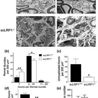 (PDF) Schwann cells regulate sensory neuron gene