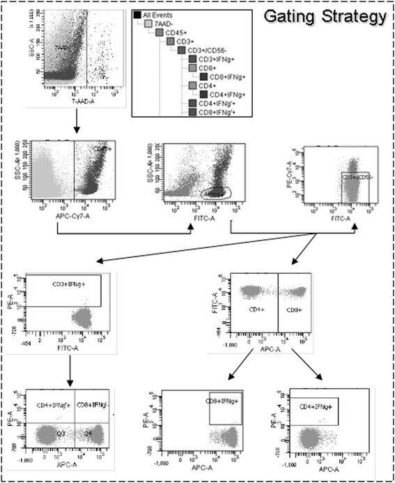 Gating strategy established for flow cytometric quality