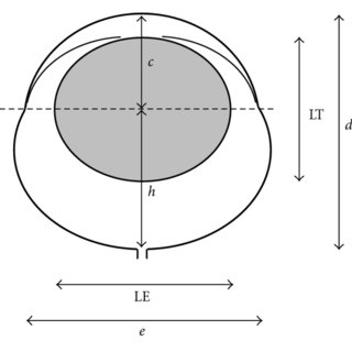 Schematic rat eye model with main parameters needed for