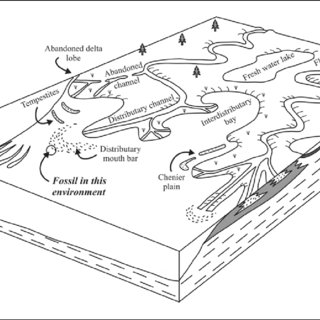 (PDF) The Bivalve Megadesmus from the Permian Volksrust